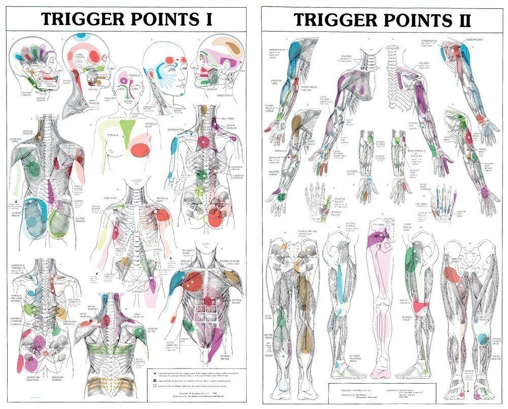 soulager douleurs musculaire deux-sevres